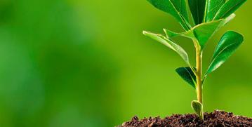 Semana Nacional do Meio Ambiente: uma luta de todos